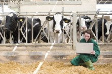 Centre for Dairy Science Innovation