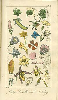 Coloured plate with botanical illustrations