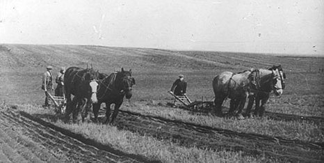 Photograph showing ploughing with horses at Laxton, c.1930s  From Ch Pa 178