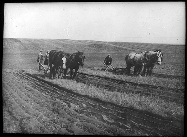 Photograph showing ploughing with horses at Laxton, c.1930s