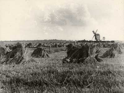 Copy photograph of Laxton Mill, c.1914