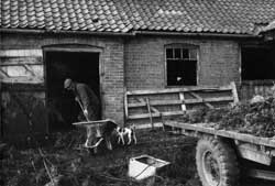 Photograph of farmer shovelling straw and manure at Town End Farm, Laxton