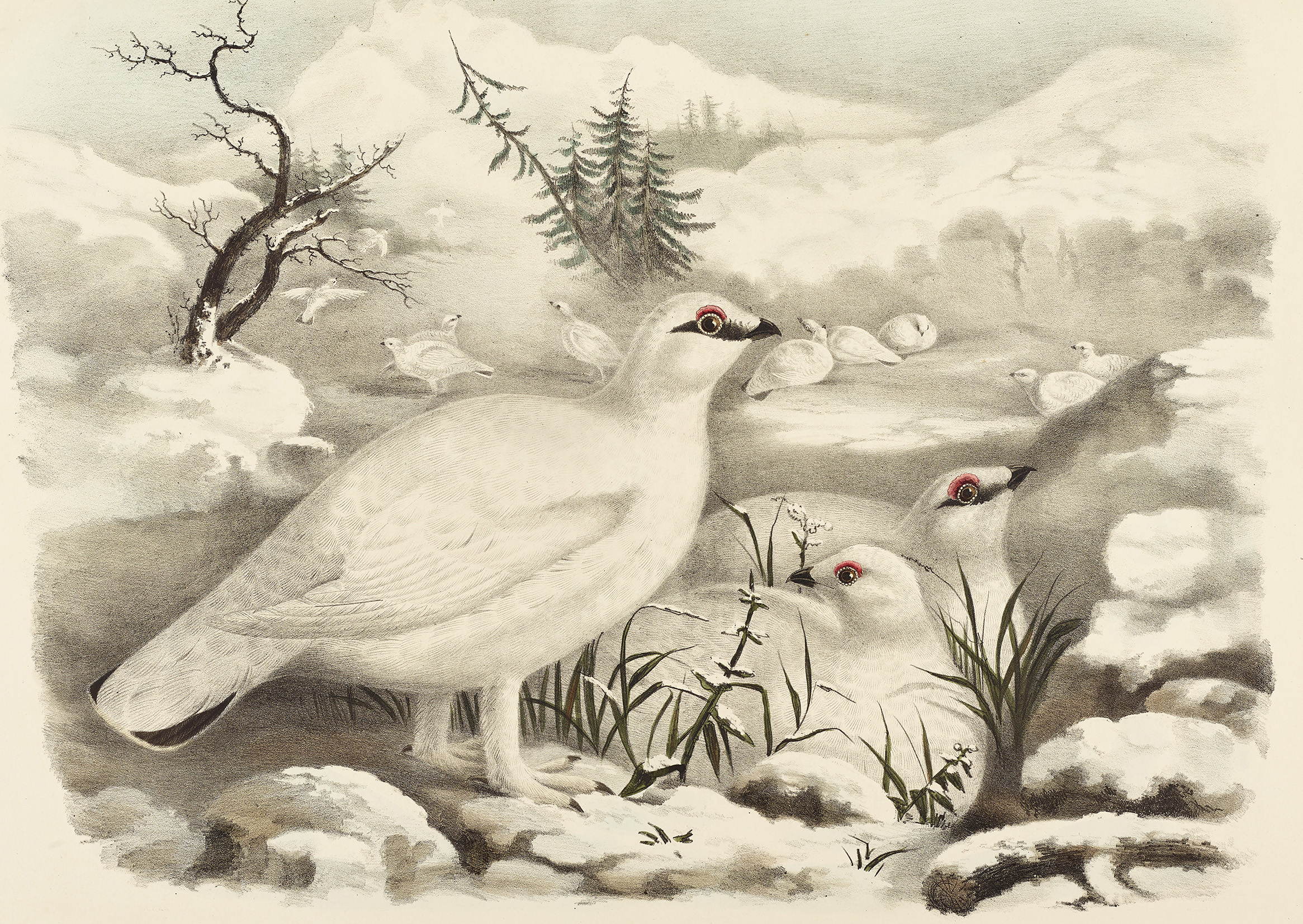Ptarmigan Christmas card