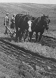 Photograph showing ploughing with horses