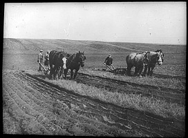 Slide showing ploughing with horses at Laxton, c.1930s