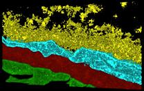maml-macromolecular