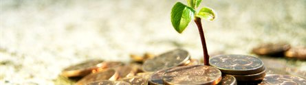A seedling growing from a pile of money