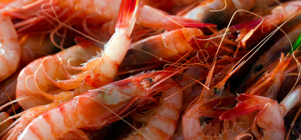 Surf and earth: how prawn shopping bags could save the planet