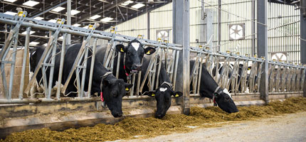 Helping British dairy farms maintain their global competitive position