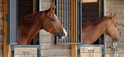 Equine flu – why don't owners vaccinate their horses?