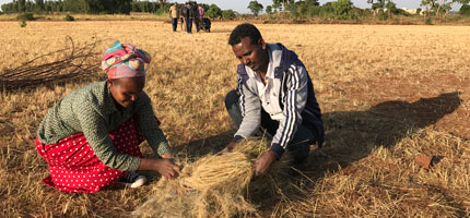 £4.4m to help reduce 'hidden hunger' in Ethiopia and Malawi
