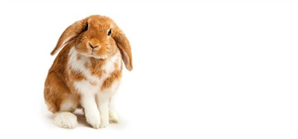 Cutest rabbit survey launched to inform safer breeding