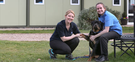 Partnership with RSPCA offers vet students hands-on shelter medicine experience