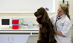 Veterinary Medicine and Surgery PGCert
