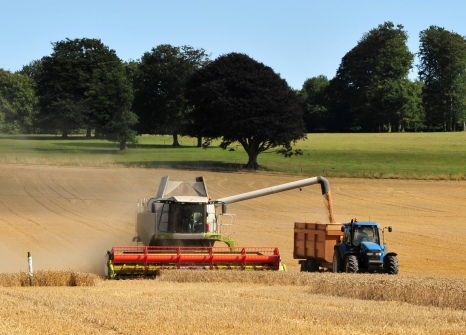 Combine harvester at work