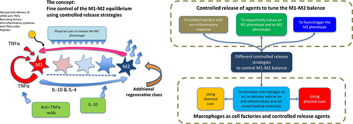 Delivery-strategies to control inflammatory response: Modulating M1-M2 polarization in tissue engineering applications