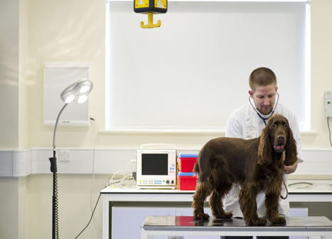 A student examining a dog