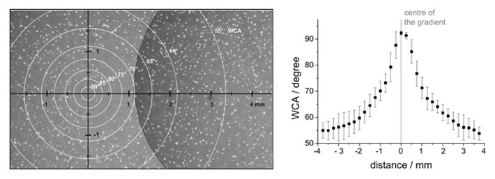 Hippocampal neurons on a radial wettability gradient (left) and profile of the wettability gradient (right). Hippocampal neurons were cultures on wettability gradients prepared by plasma deposition of hexane through a pinhole mask. The gradient was analysed by water contact angle (WCA) measurements. The number of neurons adhering to the surface decreased towards the centre of the gradient, where the surface became more hydrophobic.