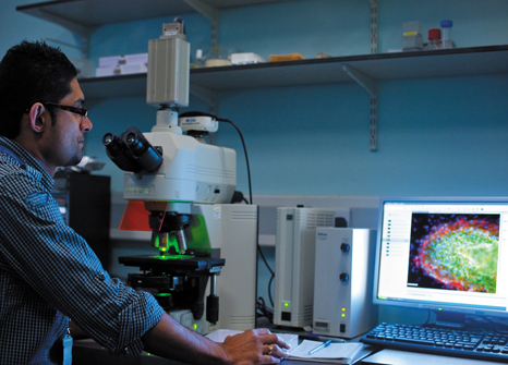 Research Fellow using a microscope to look at a heart cell