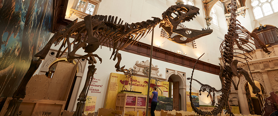 Image of dinosaurs in museum