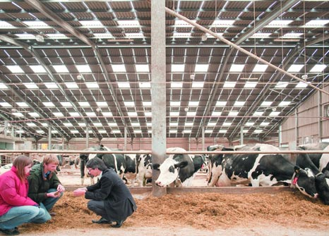 feedconf-header-cows-in-a-barn