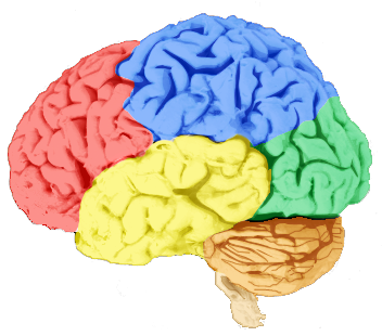 RLO: Assessment of a Patient's Level of Consciousness