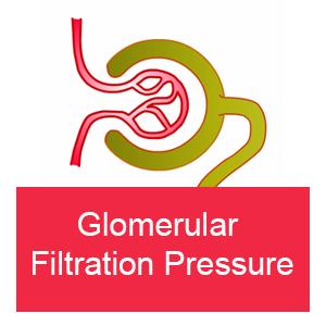 Glomerular Filtration Pressure